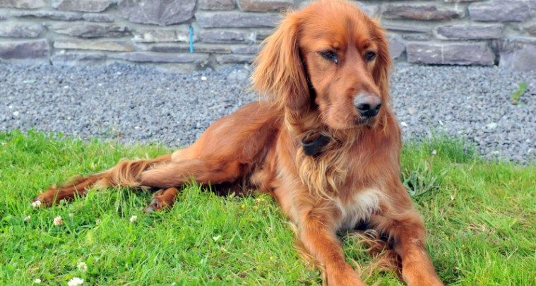 Sneem Hotel Dog Friendly Hotel Kerry With Images Dog Friendly Hotels Dog Friends Dogs