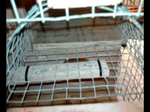 Automatic bird trap part snares traps bird and