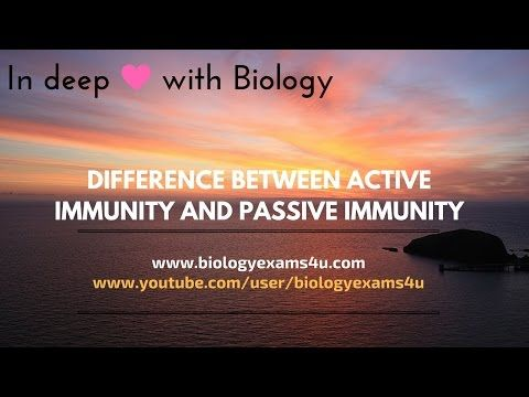 A Simple Video On Difference Between Active Immunity And Passive