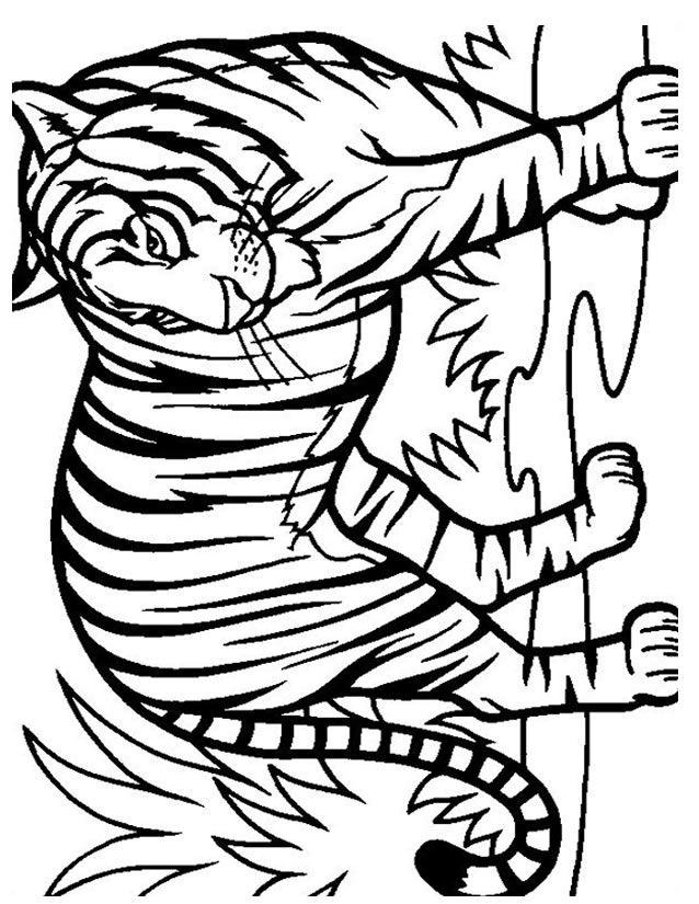 Coloriage tigre colorier dessin imprimer anniversaire tigre pinterest coloriage - Image dessin tigre ...