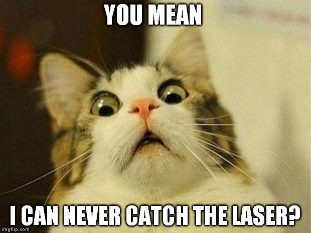 Create And Share Awesome Images Funny Cat Memes Christmas Memes Funny Funny Memes