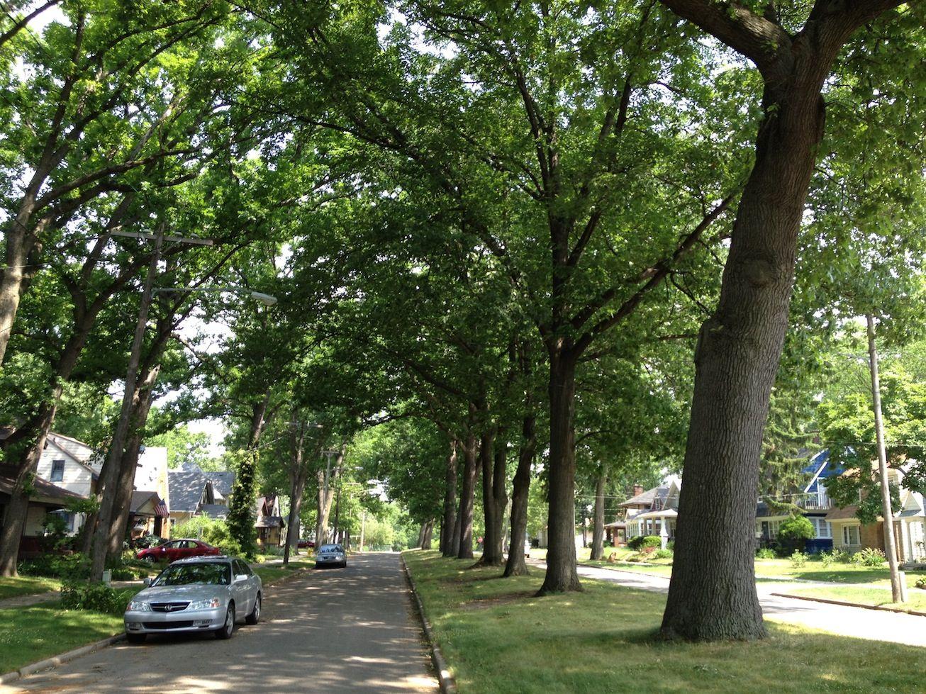 нас картинки деревьев на улицах грейдеру автобус