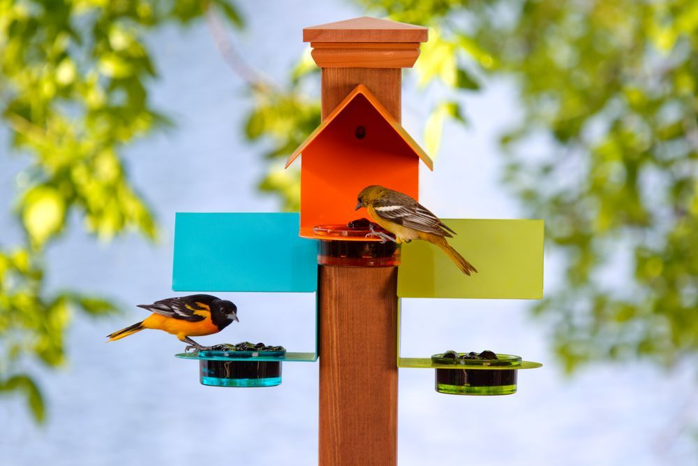 Serve your wild, feathered friends in colorful style with ...