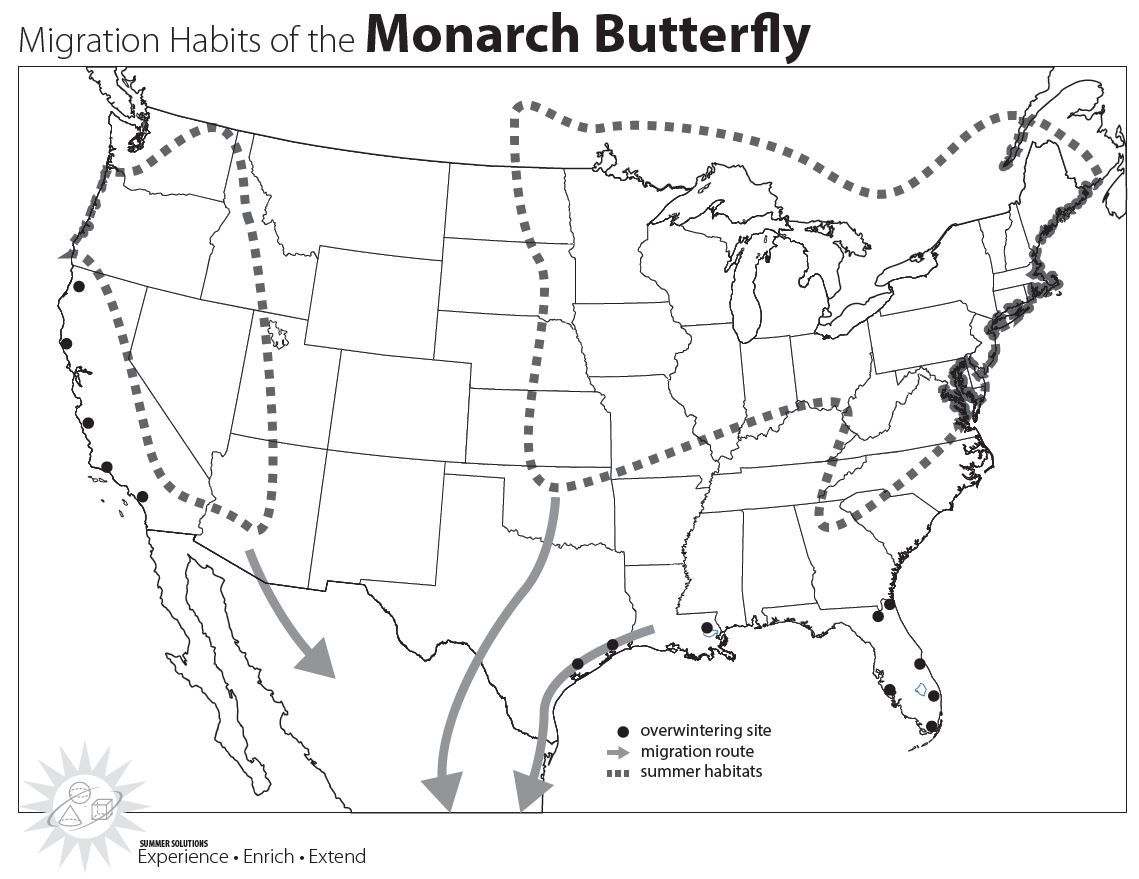 Monarch Migration Picture
