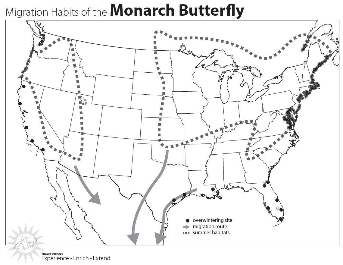 Monarch Migration Picture