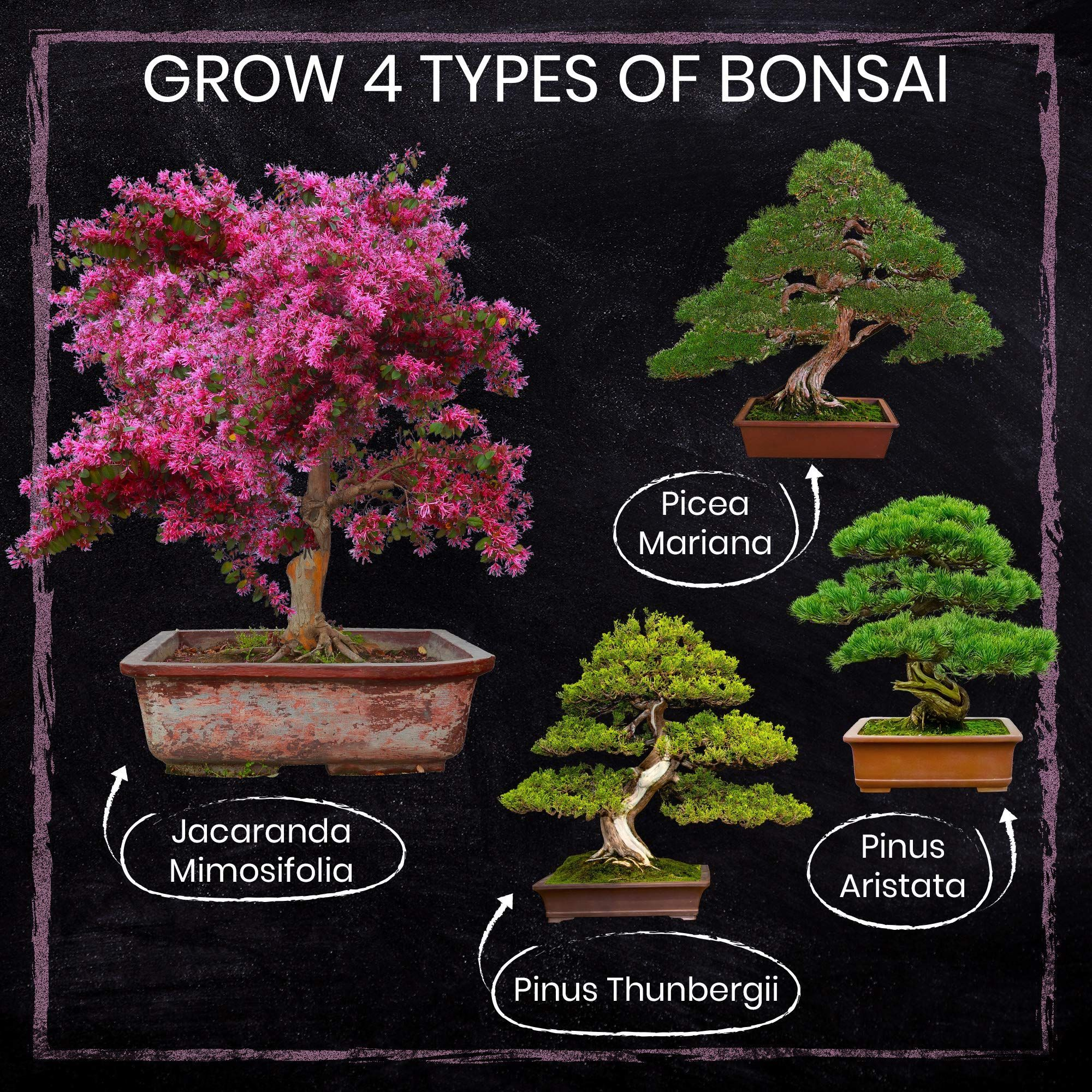 Nature S Blossom Bonsai Tree Seed Starter Kit For Beginner Gardeners A Complete Indoor Growing Set Special Garden Gift Idea For Men And Women In 2020 Tree Seeds Seed Starter Kit Gardening