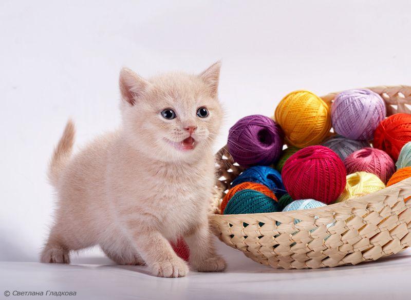 картинки клубочки для котенка зож тюменский