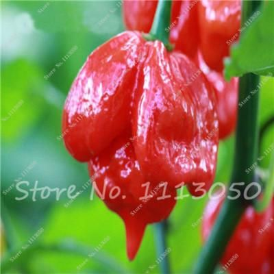 Hot 100 Pcs Multicolored Pepper Seeds,Original Vegetable Seeds Chili Pepper Seeds Balcony Potted Capsicum Bonsai for Home Garden