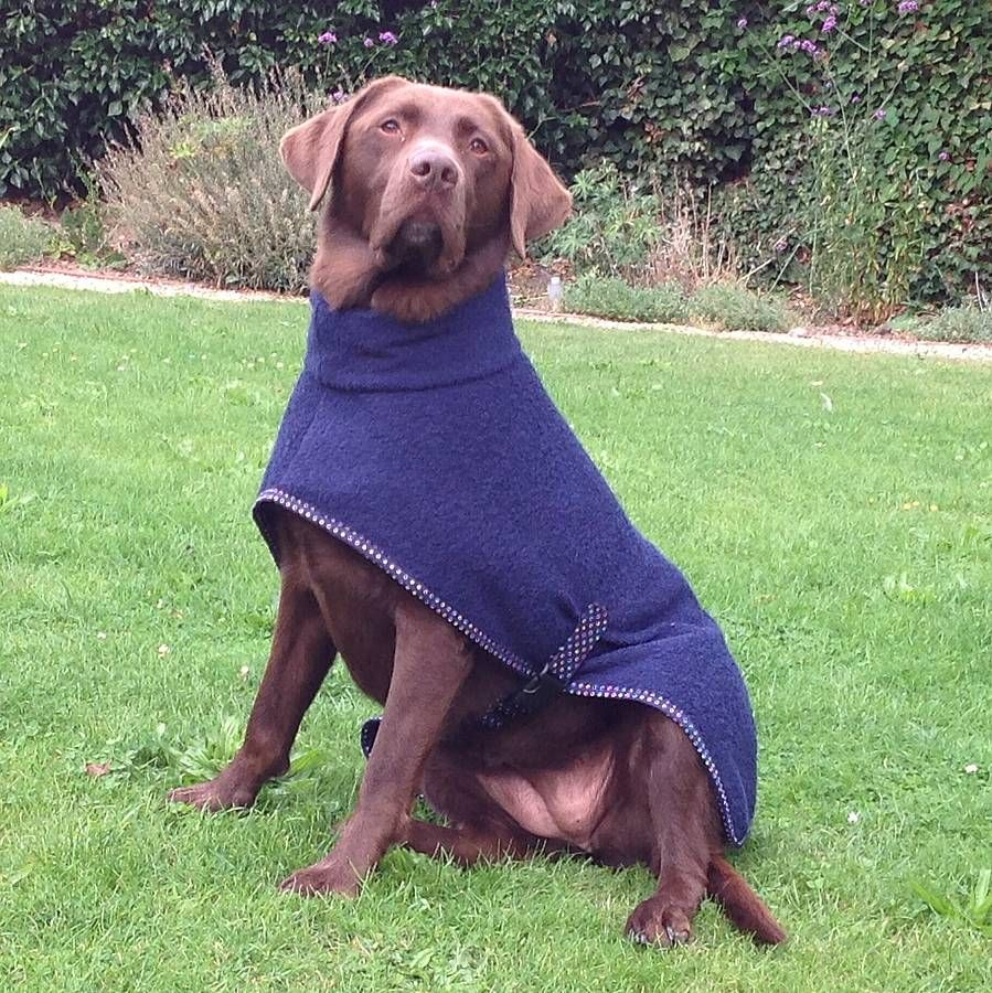towelling dog coat and mini towel by the dandy dog company | notonthehighstreet.com