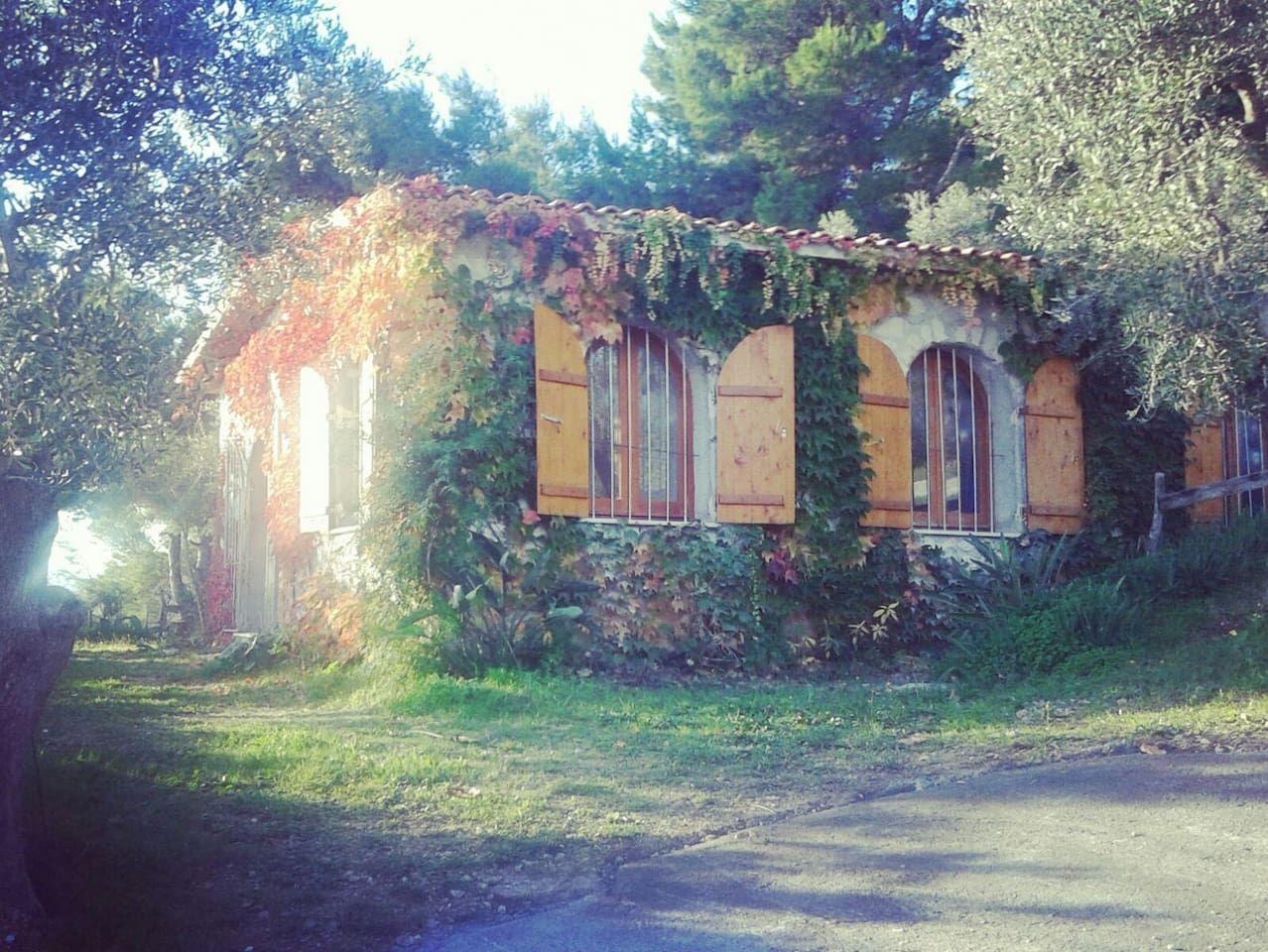 grande villa con giardino case in affitto a Vieste