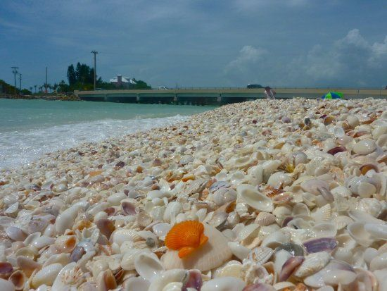 Photos Of Blind P Beach Sanibel Island Attraction Images Tripadvisor