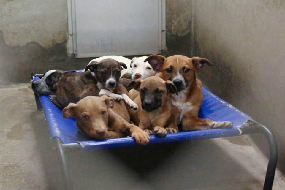 02 02 15 Odessa Super Urgent Less Than 4 Months Old Kennel A13