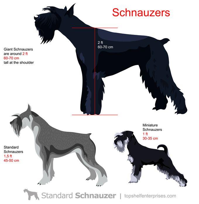 Pin by Cynthia Broadwater on Black Schnauzer | Schnauzer breed, Schnauzer,  Giant schnauzer