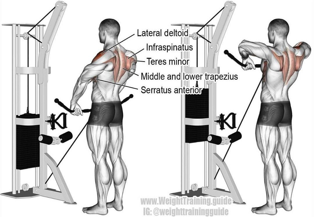 17 Best Images About Muscle Arm On Pinterest Manual Guide