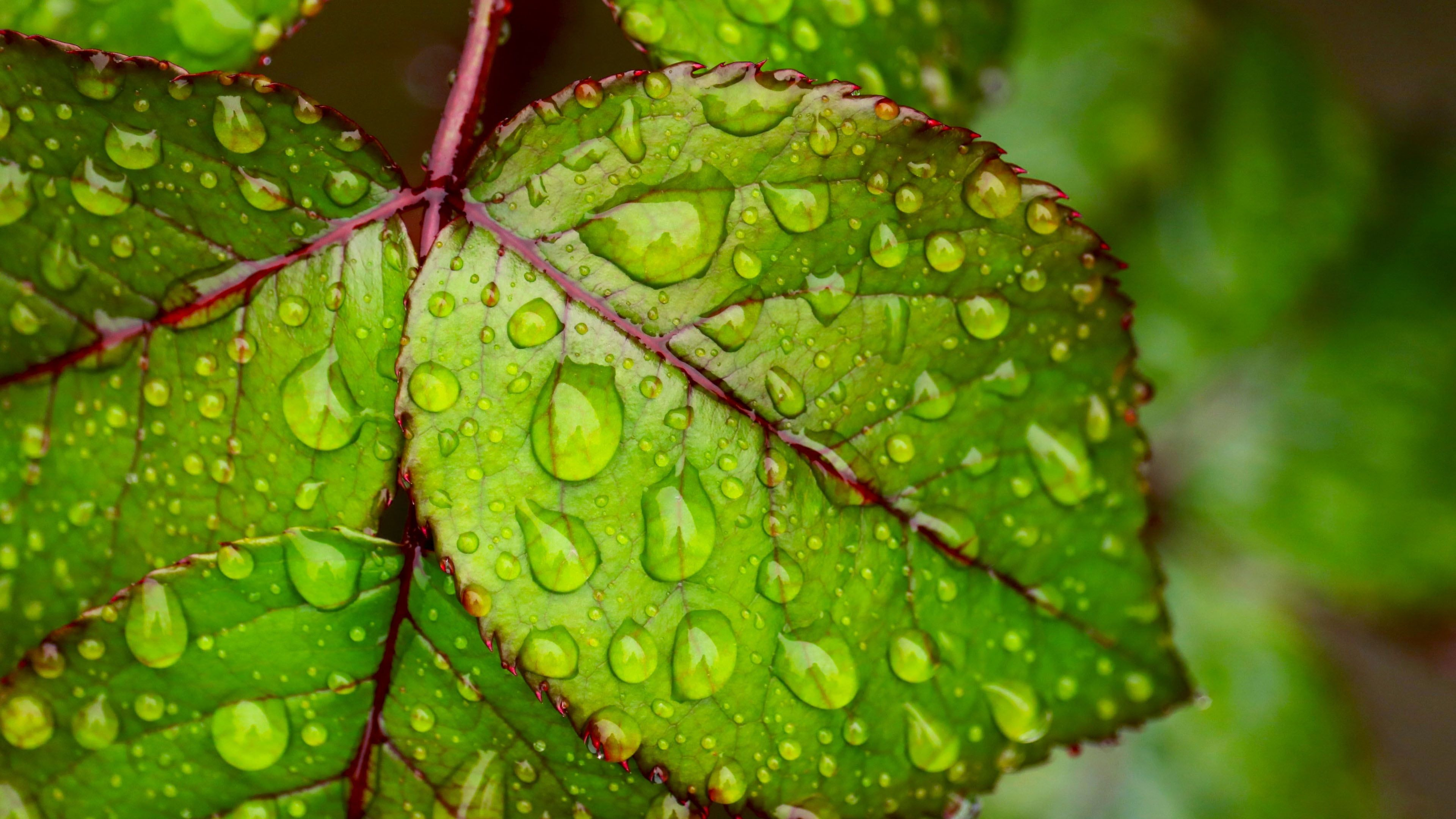 Water Droplets On Green Leaf 4k Ultra Hd Wallpapers For Mobile Phones Tablet And Pc In 2020 4k Wallpapers For Pc Wallpapers For Mobile Phones Hd Wallpapers For Mobile