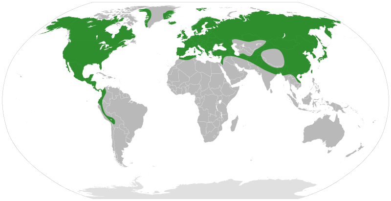 Alnus Distribution. Alder is the common name of a genus of ...