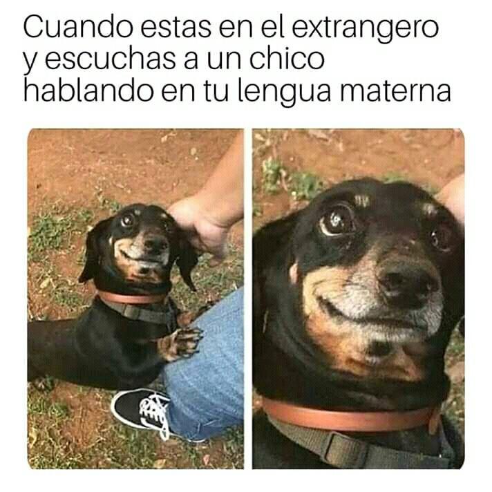 Memes Bien Gays Terminado In 2020 Funny Dog Memes Funny Animal Memes Cute Funny Animals