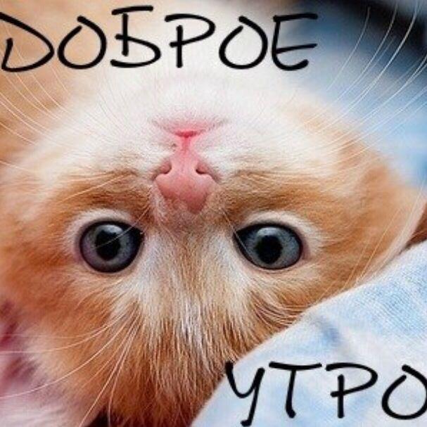 Картинки с добрым утром котенок для мужчины, открытка труду слава