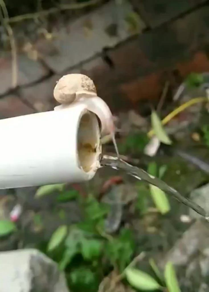 Never thought a snail could be cute buthttpsifttt