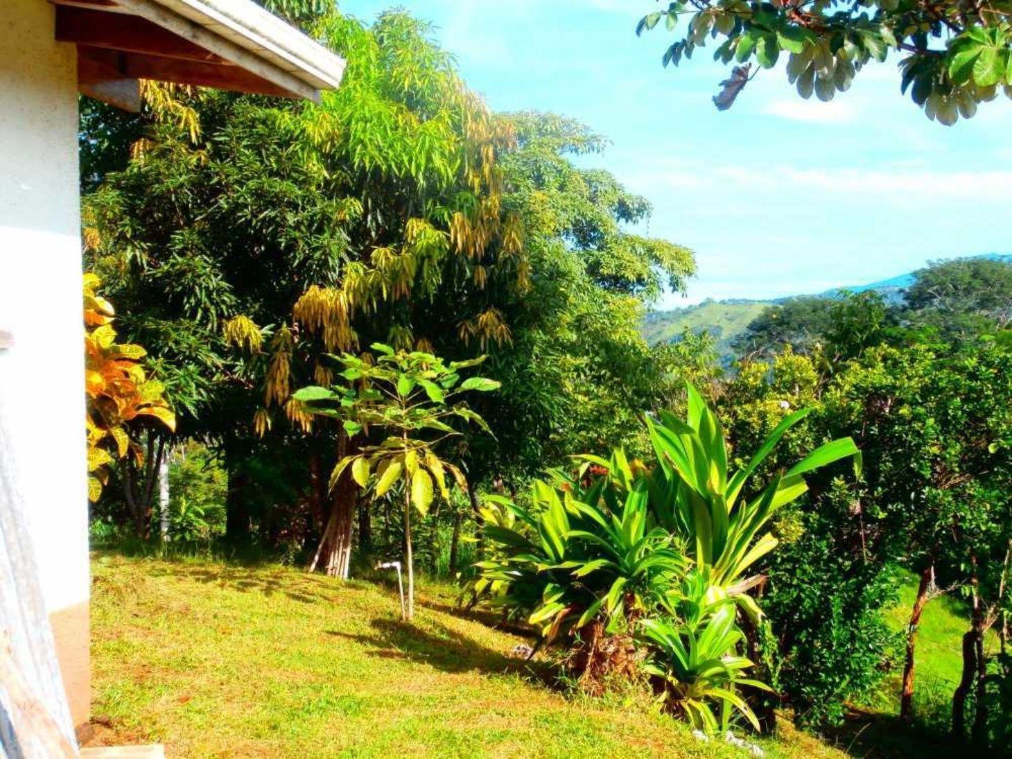 Costa Rica Finca Mit Meerblick Zu Verkaufen Kaufpreis Auf 490 000 Euro Reduziert Plants