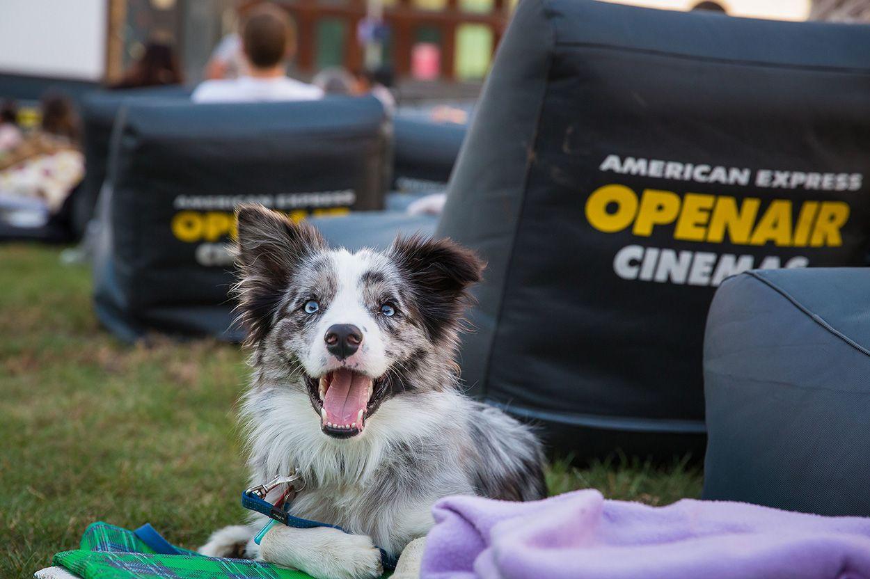 Assistance Dogs Awareness Week November 15 22 Australian Dog Lover Dog Dogsofinstagram Dogs Puppy Love Instadog Assistance Dog Dog Friends Dogs Day Out