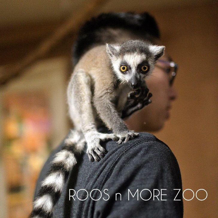 Roos n More Zoo in Las Vegas (An Interactive Zoo) Part II