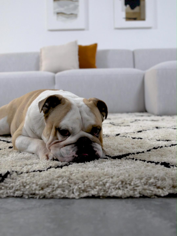 Handgetufteter Teppich Naima Video Video Wohnzimmer Teppich Teppich Wohnzimmer Teppich