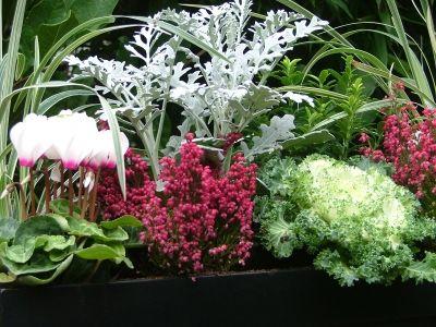 Fleurs jardiniere automne for Plante jardiniere hiver