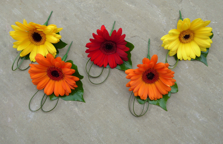Gerbera buttonholes colourful and fun wwwthelilylocket