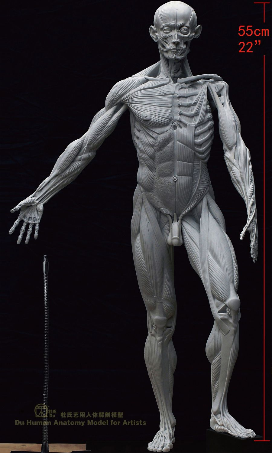 Du-Human-Anatomy-Model-for-Artists-Muscles-Artistic-Mannequin-Male ...