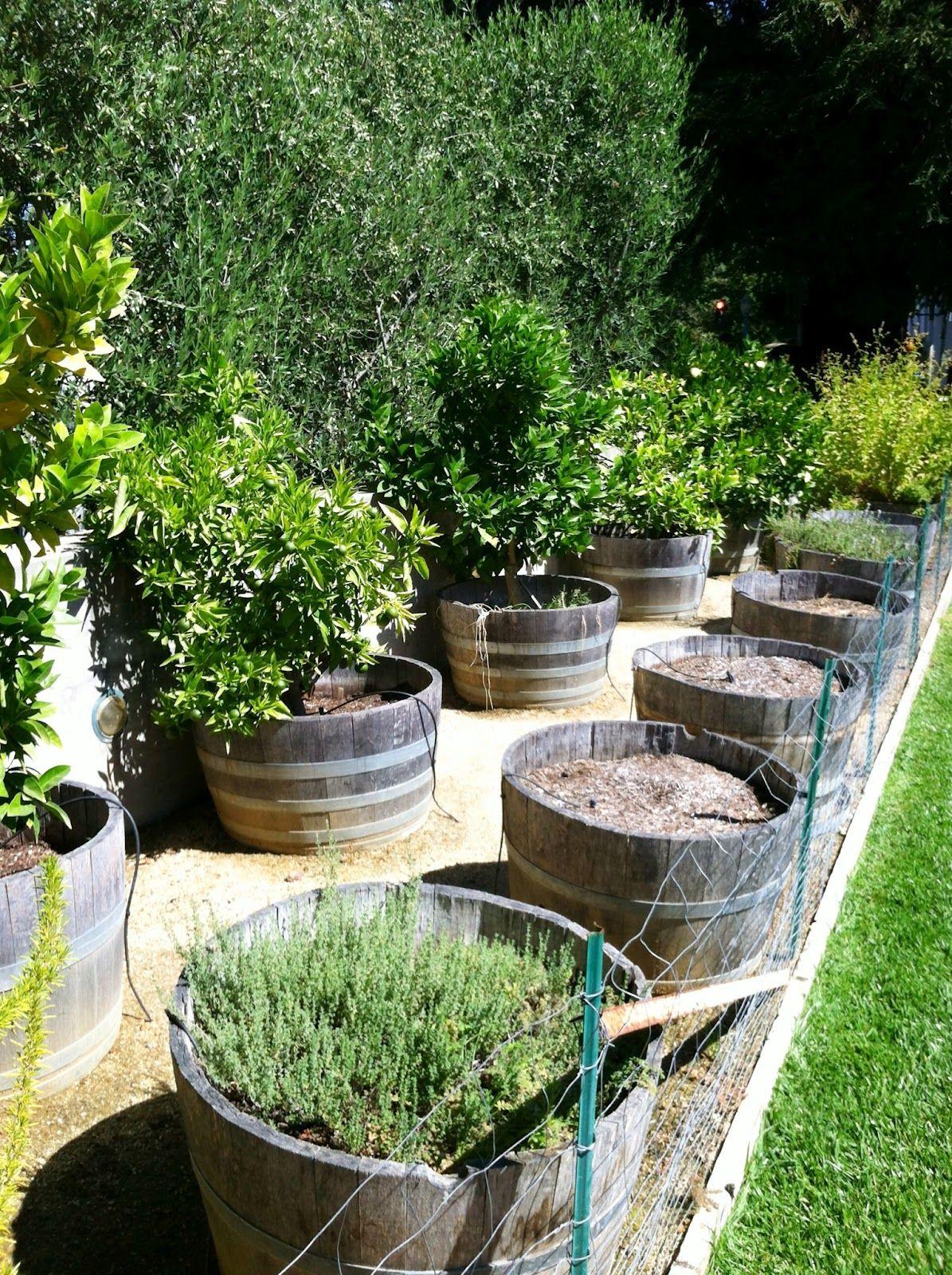 Grow It Now Wine Barrel Gardening Wine Barrel Garden Wine Barrel Planter Fruit Trees In Containers