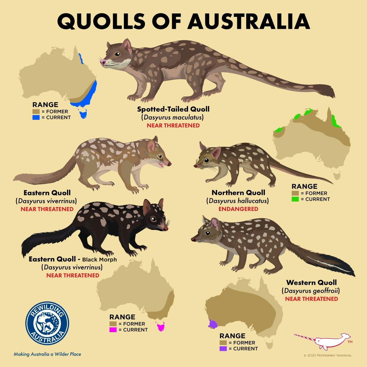 Pin By Cuongtran On Animals In 2020 Quoll Australia Animals Rare Animals