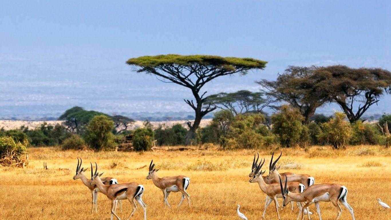 Sous le soleil de la savane le soleil soleil et fond - Animaux savane africaine ...