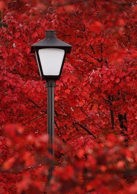 Pin Von Pierre Labbe Auf Fotos Cautivantes In 2020 Rot Farbe Regenbogenfarben Herbstfarben