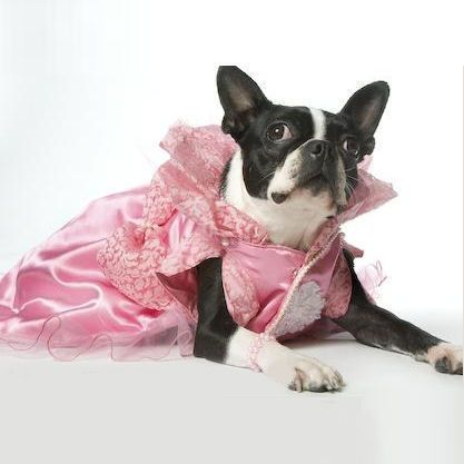Bellas Ball Dog Gown | Dog Dresses | Pinterest | Dog dresses, Dog ...