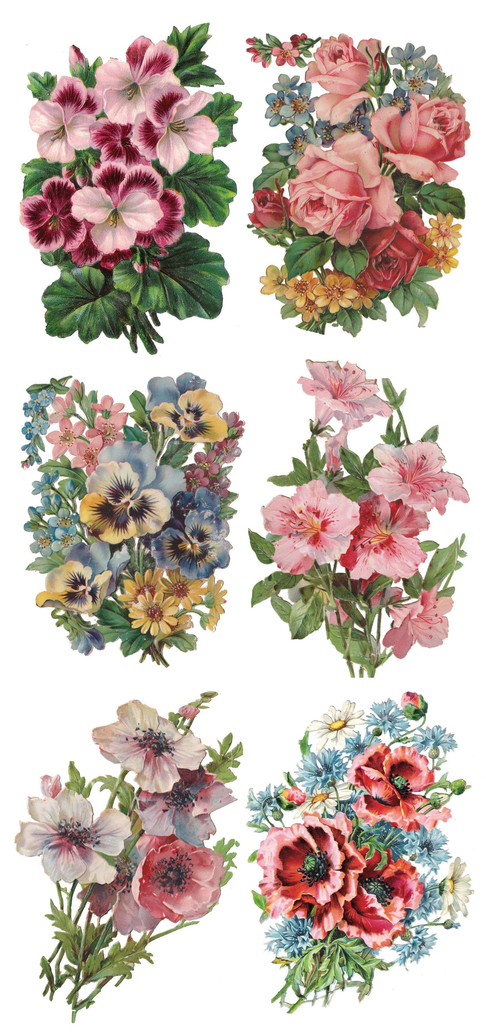 Y114 Nellie Flower art, Flower printable, Vintage flowers