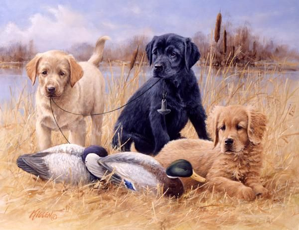 Sporting Dog Artwork And Original Paintings And Printsby Jim Killen 14 Hunting Dogs Golden Retriever Sporting Dogs