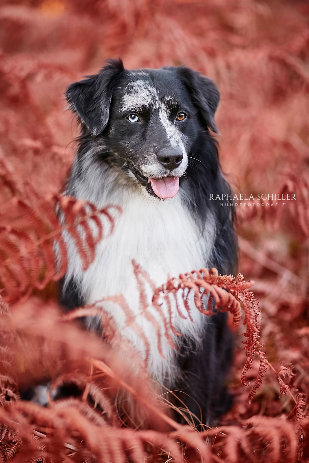 Pin Von Szaszi Anna Auf Kutyak Hundefotografie Hundefotos Hunde