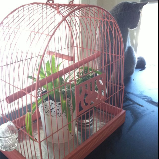 I converted a vintage birdcage into a cat proof home for plantsbirdcage