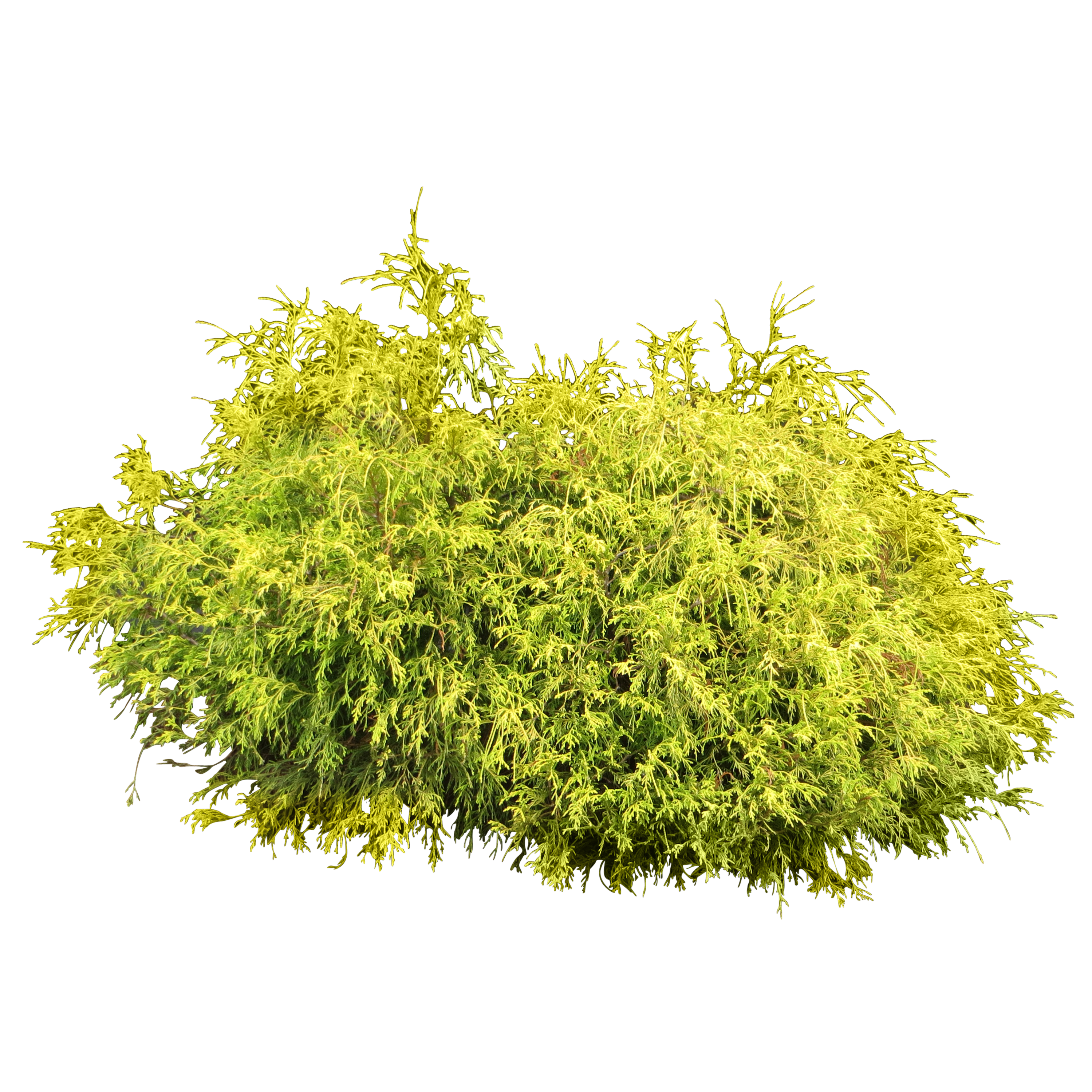 Shrub png google search landscape rendering usefull links