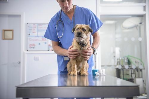 93 Best Veterinarian Education Ideas Veterinarian Education Veterinarian Veterinary