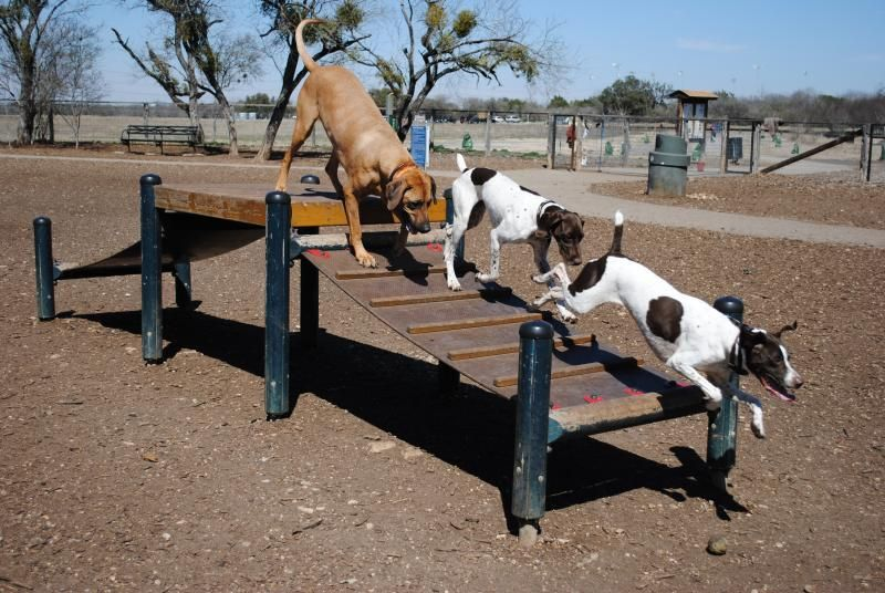 Mcallister Dog Park San Antonio Dog Goes Dog Enclosures Dog
