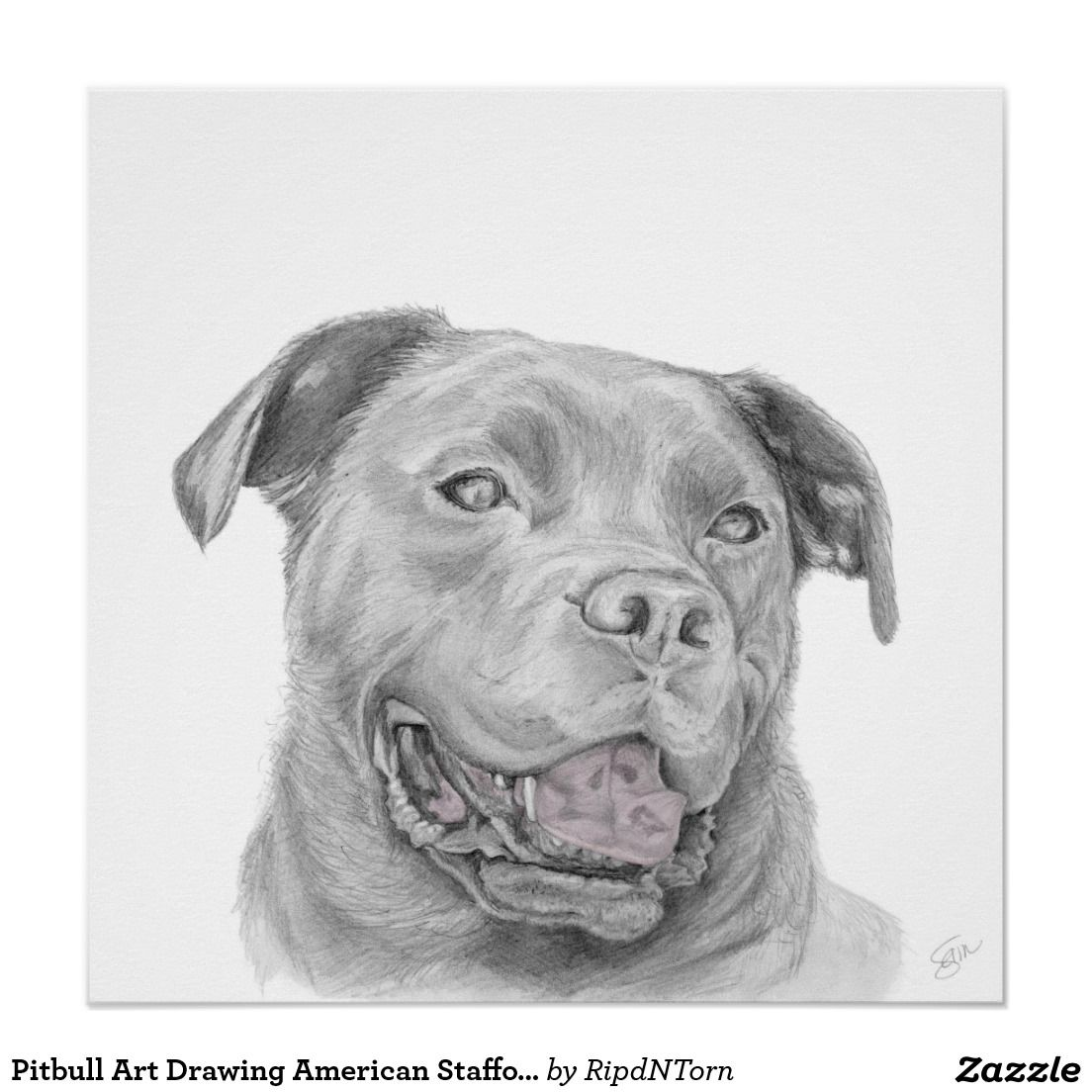 Pitbull Art Drawing American Staffordshire Terrier Poster Zazzle