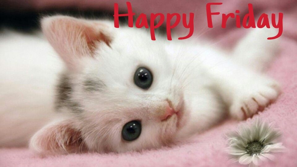 Happy Friday!!! Cute Kitty!!! :)