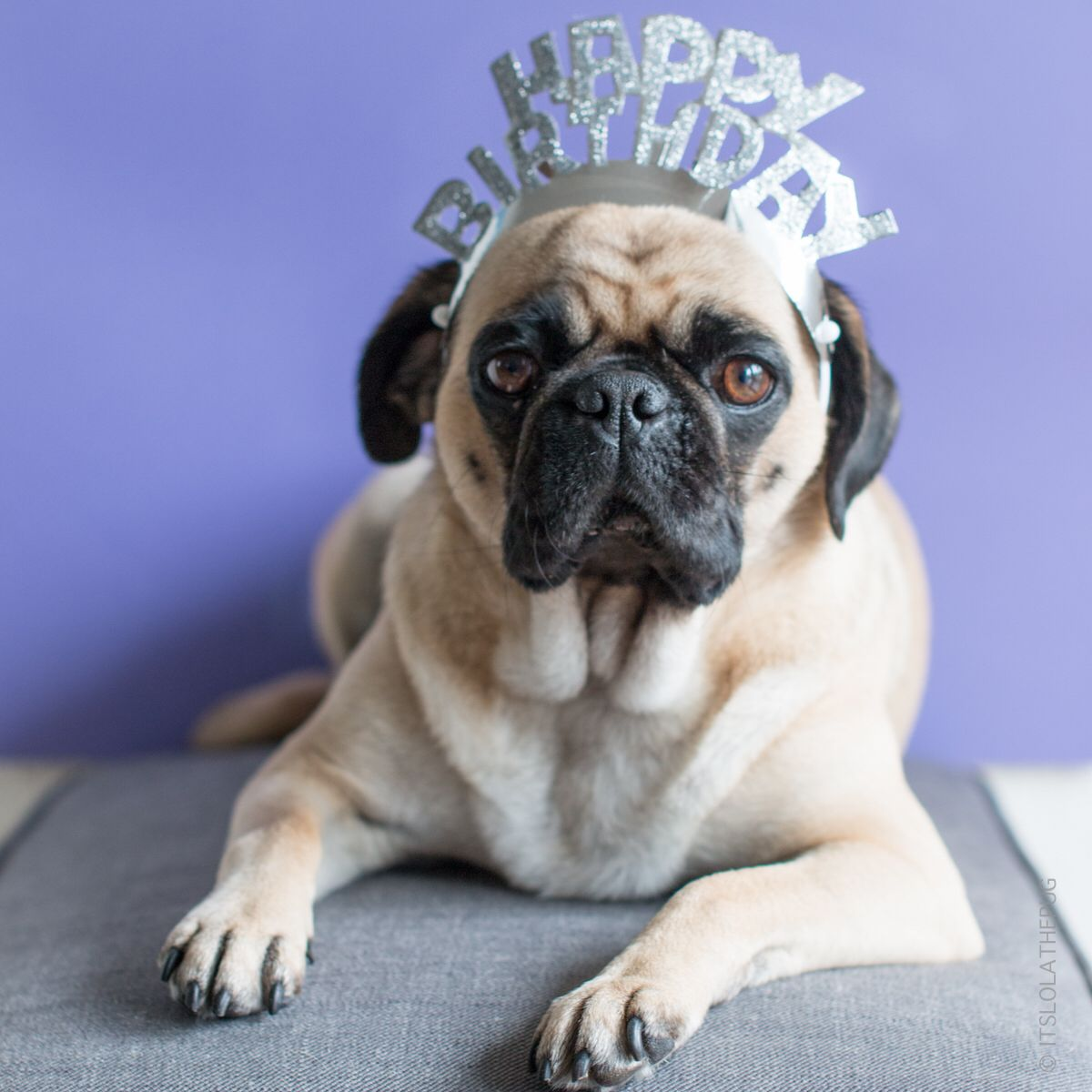 It S My 4th Birthday Today Time To Celebrate