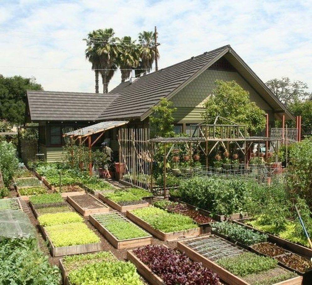 Most Popular Kitchen Garden Design Ideas 33 Garden Layout Backyard Backyard Garden Urban backyard farming ideas
