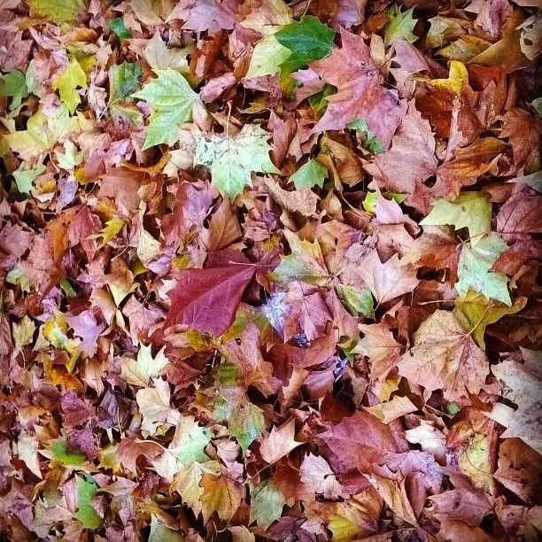 #otoño #beautiful #nature