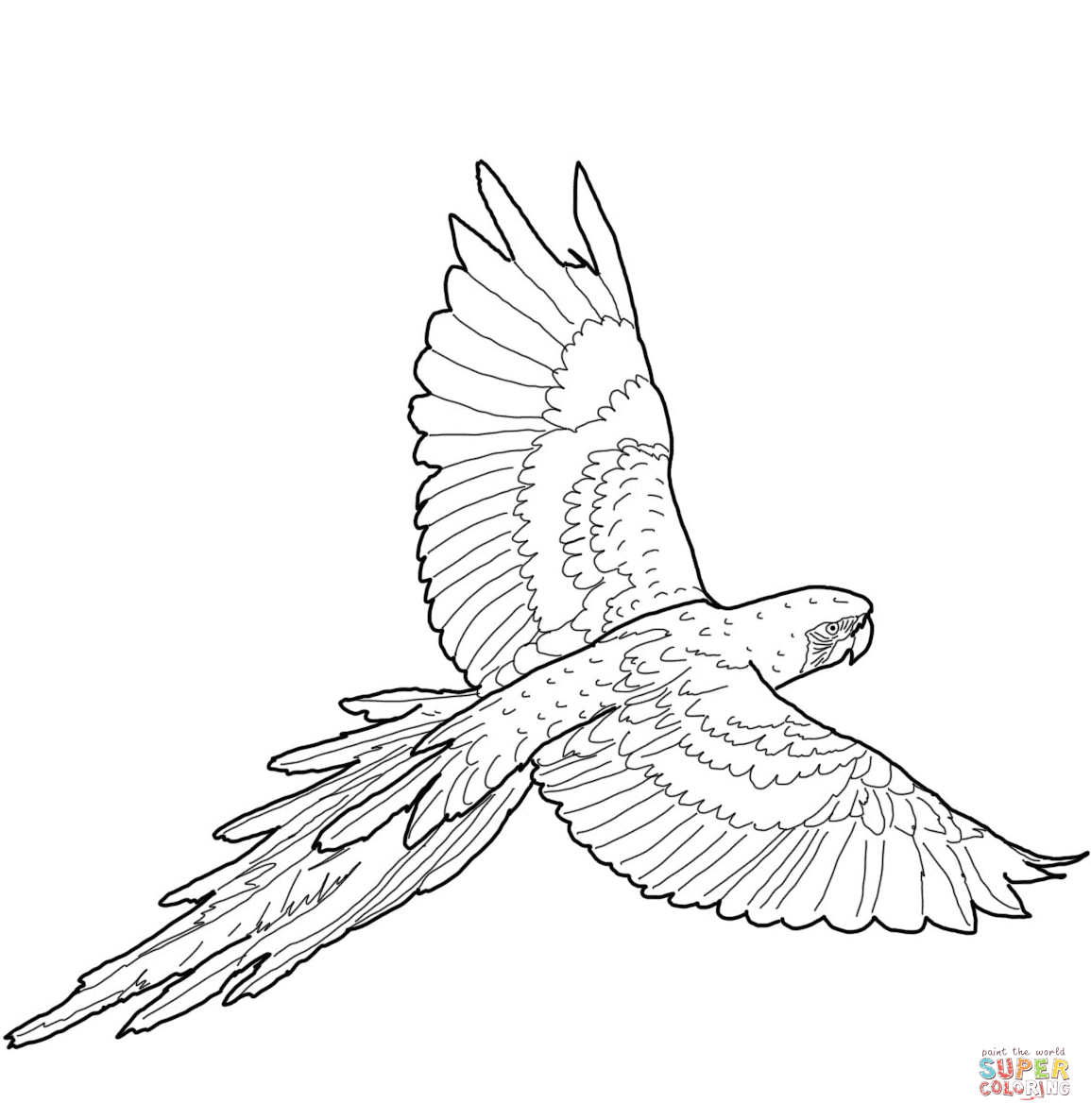 Flying Red And Green Macaw Coloring Page Free Printable Coloring Pages Bird Coloring Pages Coloring Pages Free Printable Coloring Pages