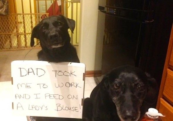 Dogs Who Ve Been Real Jerks To Their Dear Old Dads Dog Shaming Cute Funny Pics Dogs