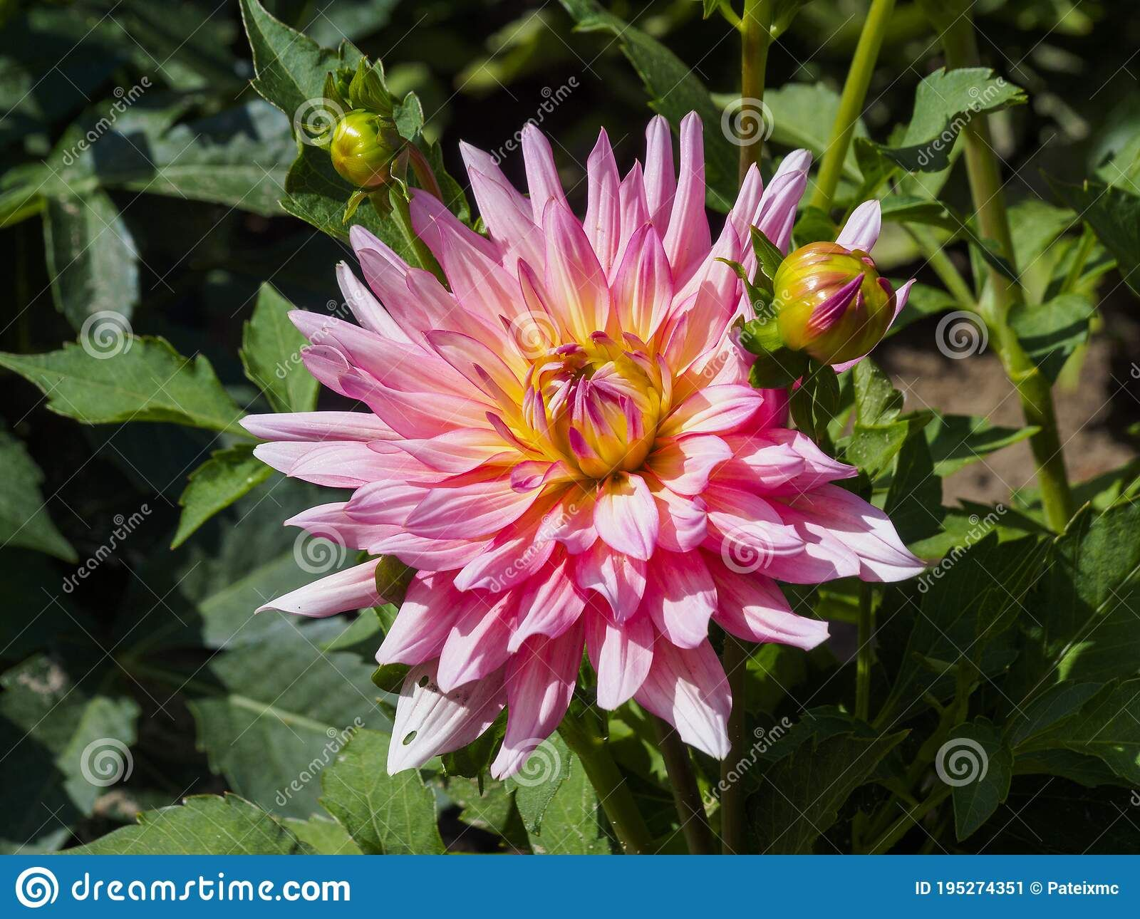 Pin On Dreamstime Stock Photography